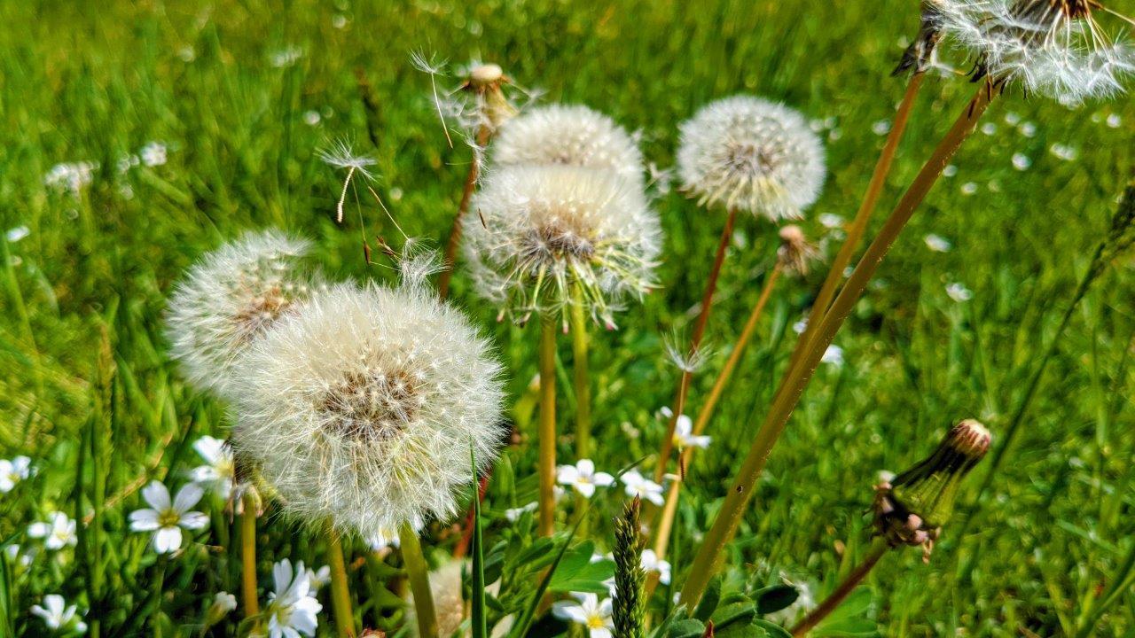 Alergie po ajurwedyjsku – Vata